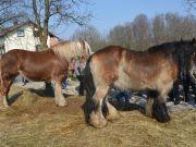 sajam-Cetingrad-2015-29