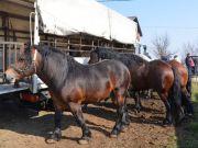 sajam-Cetingrad-2015-20